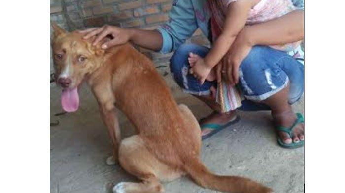 Viral 11 Anjing Dibantai di Pacitan, Polisi Sudah Periksa 4 Orang: Ada Beberapa Info