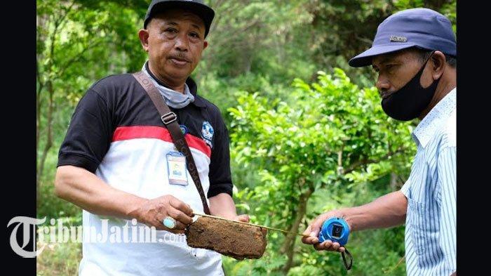 Batu Bata Diduga Peninggalan Sejarah Ditemukan diAlas Kasinan,BPCB Trowulan: Persis di Songgoriti