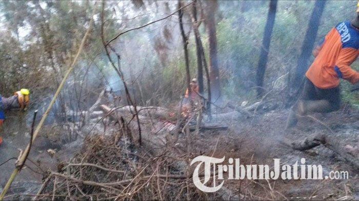 Masalah yang Timbul Akibat Hutan Terbakar di Kota Batu, Rantai Makanan Putus & Debit Air Berkurang