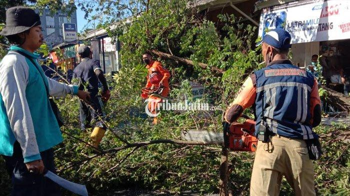 Pohon Ceri Tumbang Timpa Empat Sepeda Motor di Kota Malang, Korban: Padahal Cuaca Cerah