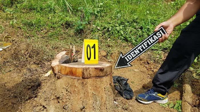 Buntut Tewasnya Pembalak Liar, Satreksrim Polres Trenggalek Tetapkan Tiga Tersangka Illegal Logging