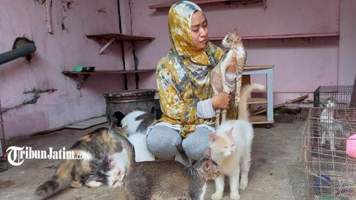 Kisah 'Mak Kucing' Lumajang, Rawat Puluhan Kucing Terlantar Seperti Anak Sendiri: Dia Minta Tolong