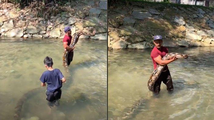 VIRAL Video Cik Kiah Ular Piton Raksasa Disebut Kencing Waktu di Sungai, Sebulan Perawatan Rp2 Juta