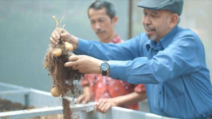 UMM Kembangkan Benih Kentang Varietas Unggul, Miliki Potensi Produksi hingga 50 Ton per Hektar