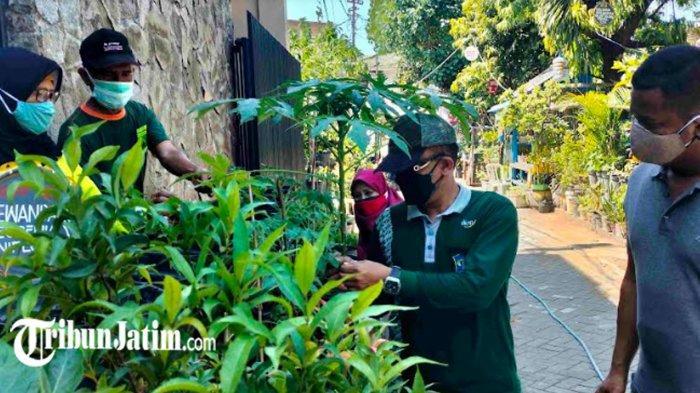Warga Kelurahan Simomulyo Baru Lakukan Urban Farming, Dorong Ketahanan Pangan di Tengah Pandemi