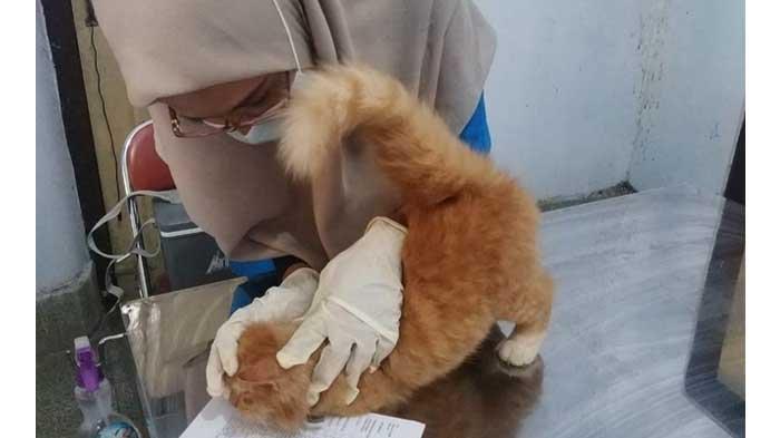 Warga Trenggalek Antusias Ikutkan Hewan Peliharaannya Vaksin Rabies Gratis, Kuota Langsung Penuh