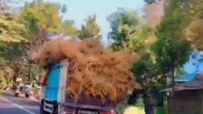 Viral Video Truk Oleng Ugal-ugalan di Pacitan, Polisi Tangkap Sopir: Berakhir Permintaan Maaf