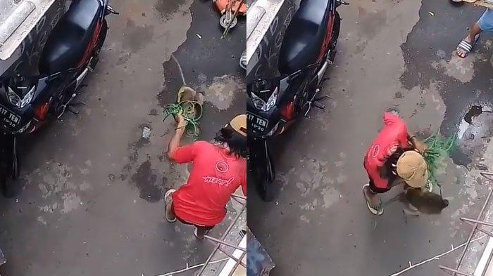 VIRAL Kekerasan Monyet Ditabok dan Berkali-kali Ditendang 'Pawangnya', Mau Lari Leher Ditarik Tali