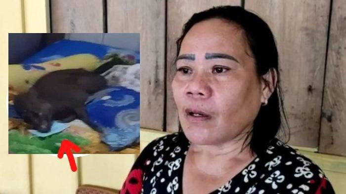 VIRAL Babi Bermasker Tidur di Ranjang Milik Warga Konawe, Disebut Babi Ngepet? Ini Fakta di Baliknya