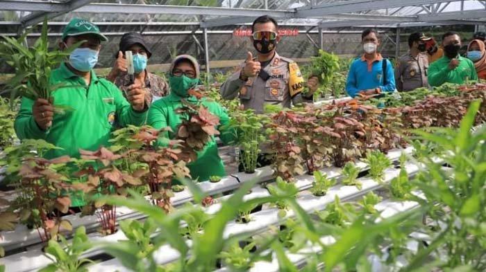Gowes Pagi, Wali Kota Maidi Sambangi Lapak UMKM dan Ikut Panen di Kebun Hidroponik