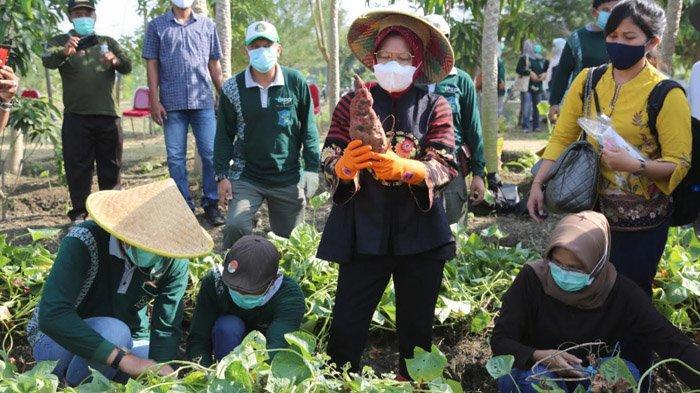Jurus Wali Kota Risma Menghadang Resesi Ekonomi di Surabaya Akibat Pandemi Covid-19
