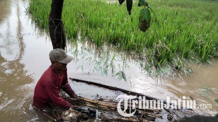 Hujan Deras hingga Dini Hari, Puluhan Rumah di Dua Desa di Kabupaten Mojokerto Terendam Banjir