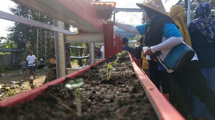 Dinas Pertanian dan Pangan Kembangkan Demplot di 6 Desa Trenggalek agar Punya Daya Tarik Wisata