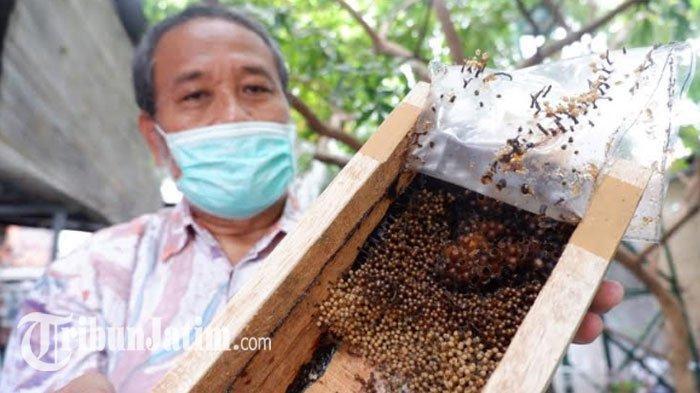 Warga RW 4 Perumahan ITS Budidaya Lebah Klanceng di Halaman Belakang Rumah, 'Cocok di Surabaya'