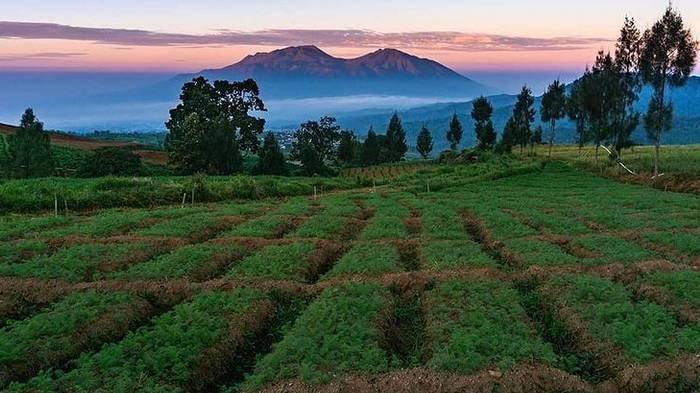 Harga Tiket Masuk Wisata Alam Brakseng Batu, Suguhkan Pemandangan Lahan Pertanian yang Luas & Indah