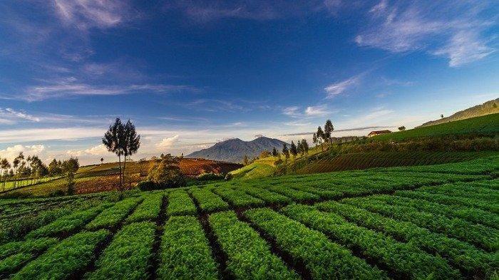 Harga Tiket Masuk Wisata Alam Brakseng, Destinasi Favorit Malang, Nikmati Hijaunya Lahan Pertanian