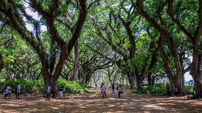 Harga Tiket Masuk dan Jam Buka Wisata De Djawatan, Bisa Nikmati Panorama Pepohonan Trembesi Raksasa