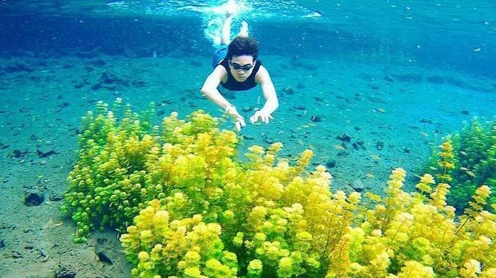 Harga Tiket Masuk Wisata Sumber Sirah Malang, Bisa Berenang Sambil Lihat Ganggang Hijau & Ikan-ikan