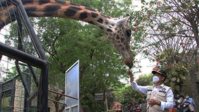 Wisata Maharani Zoo dan Goa Lamongan Sudah Dibuka, Berikut Syarat untuk Pengunjung