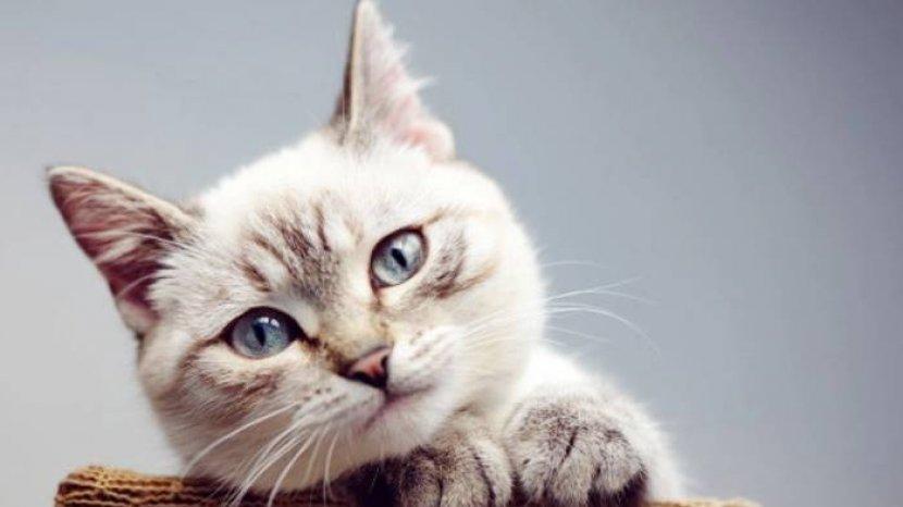 ilustrasi-kucing-arti-mimpi-melihat-kucing-dianggap-sebagai-sebuah-pertanda-perjalanan-hidup.jpg