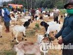 aktivitas-pasar-hewan-di-gandusari-kabupaten-trenggalek-ilustrasi-pasar-hewan-trenggalek.jpg