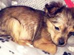 anak-anjing-di-irlandia-dihantam-palu-lalu-dimasukkan-microwave_20180209_124747.jpg
