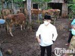 berita-banyuwnagi-bupati-banyuwangi-abdullah-azwar-anas-memantau-pelayanan-kesehatan-sapi.jpg