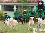 berita-gresik-balap-kambing-di-halaman-sekolah-smk-muhammadiyah-5-gresik.jpg