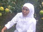 berita-pasuruan-khofifah-di-kebun-apel-nongkojajar-pasuruan_20180302_161605.jpg