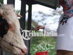 berita-pasuruan-susu-sapi-desa-wisata-pauruan_20180319_112111.jpg