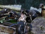 berita-pasuruan-taman-safari-prigen-tsp-penguin-day.jpg