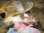 berita-ponorogo-pencurian-bh-wanita-di-ponorogo_20180428_145236.jpg