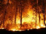 berita-surabaya-jatim-kebakaran-hutan_20170813_224455.jpg