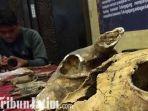 berita-tulunggaung-museum-peradaban-di-tulungagung.jpg