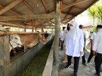 bupati-banyuwangi-ipuk-fiestiandani-meluncurkan-program-sms-pisan-sapi-manak-setahun-pisan1.jpg