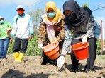 bupati-banyuwangi-ipuk-fiestiandani-menyerahkan-bantuan-benih-jagung-hibrida-kepada-kelompok-tani.jpg