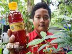 dimas-dzaky-siswa-smp-negeri-22-surabaya-emproduksi-minuman-herbal-daun-salam.jpg