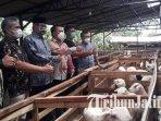 dinas-pertanian-bondowoso-mengunjungi-lokasi-bisnis-ternak-milik-ahli-mahrus-ilustrasi-kambing.jpg