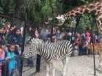 foto-pengunjung-di-kebun-binatang-surabaya-kbs.jpg