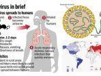 gejala-orang-yang-terinfeksi-hantavirus-ciri-cirinya-punya-masa-inkubasi-8-minggu.jpg