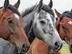 ilustrasi-beberapa-arti-mimpi-tentang-kuda.jpg