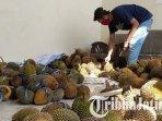 ilustrasi-durian-mahasiswa-kreatif-trenggalek-memilah-durian-untuk-dijual-demi-berdonasi.jpg
