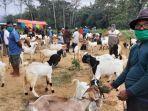 ilustrasi-hewan-kurban-di-pasar-hewan-di-kabupaten-trenggalek.jpg