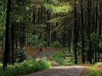 ilustrasi-hutan-pinus-viral-nasib-pilu-gadis-berjilbab-di-tengah-hutan-nyaris-telanjang.jpg