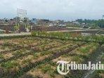 ilustrasi-lahan-pertanian-di-desa-ampeldento-kecamatan-karangploso-kabupaten-malang.jpg