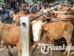 ilustrasi-pasar-hewan-dimoro-kota-blitar-sepekan-jelang-hari-raya-idul-adha-ilustrasi-hewan-kurban.jpg