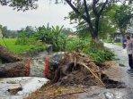 ilustrasi-pohon-tumbang-akibat-diterjang-angin-kencang-di-jalan-sumba-kota-blitar.jpg