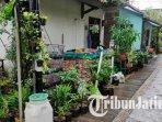 ilustrasi-tanaman-toga-dan-tanaman-yang-ditanam-oleh-warga-di-kampung-terapi-hijau-kota-malang.jpg