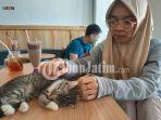 kafe-kucing-bermain-bersama-para-kucing-yang-ada-di-neko-kepo-cat-cafe-surabaya.jpg