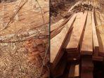 kayu-kamper-ditinggal-pencurinya-di-pemakaman-umum-desa-karang-entang-bangkalan-madura.jpg